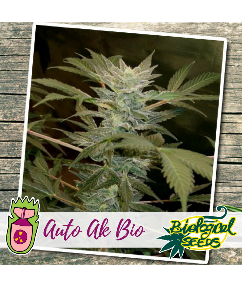 BIOLOGICAL SEEDS AUTO AK BIO