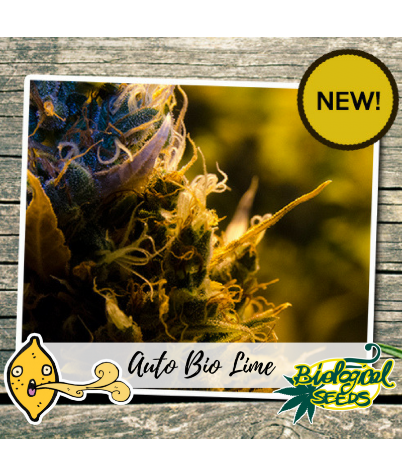 BIOLOGICAL SEEDS AUTO BIO LIME