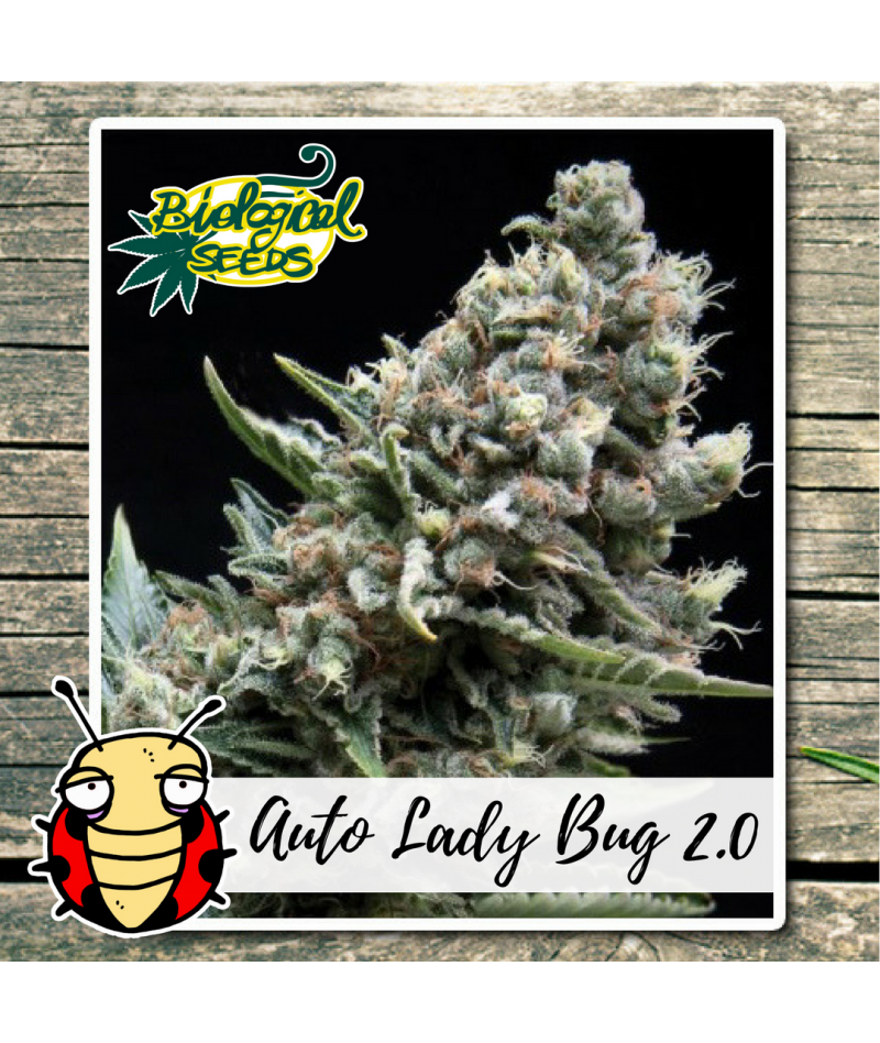 BIOLOGICAL SEEDS AUTO LADY...