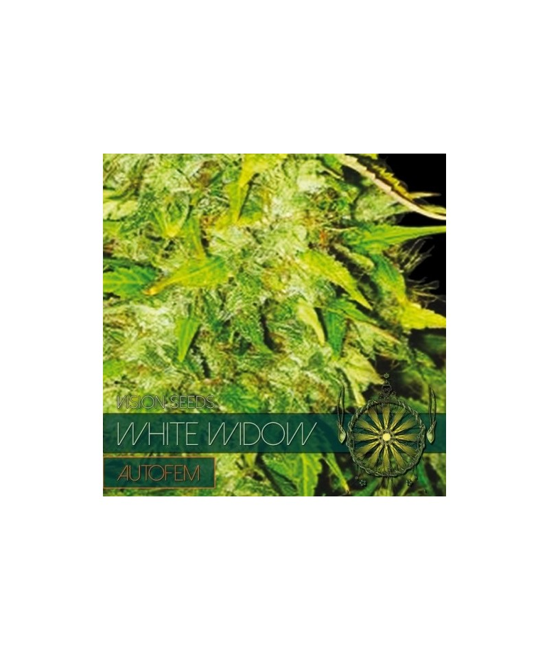 VISION SEEDS WHITE WIDOW...