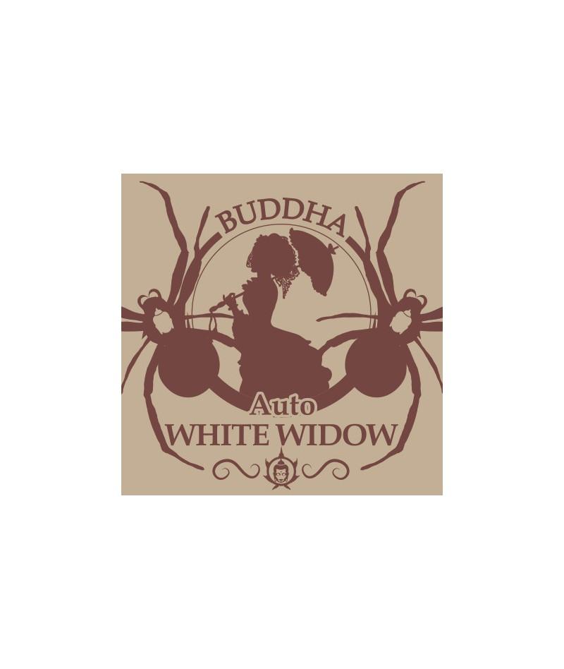 BUDDHA AUTO WHITE WIDOW -...