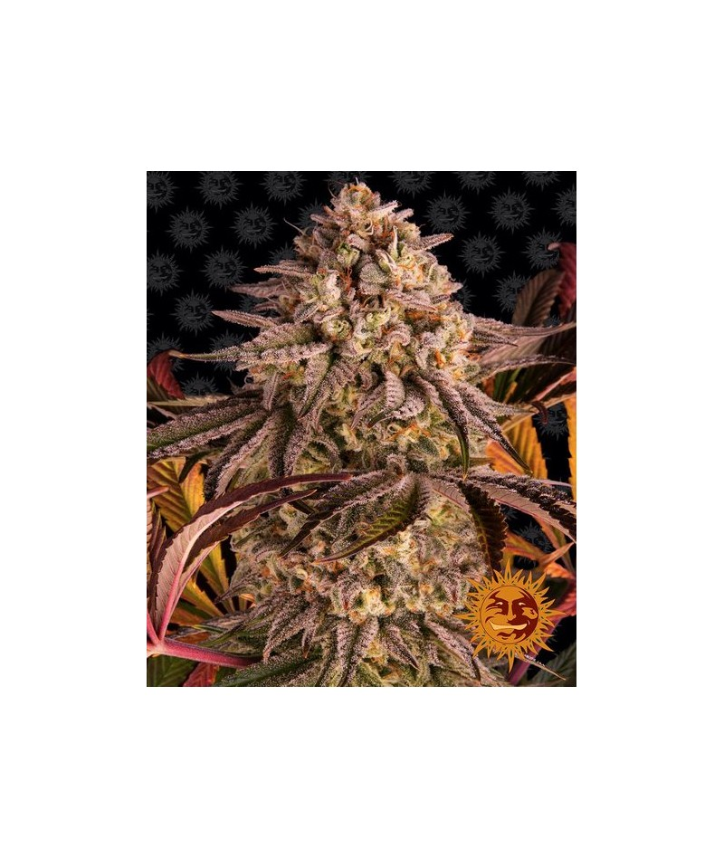 BLUE SUNSET SHERBERT -...